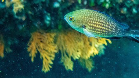 Plongées dans les îles d'Or