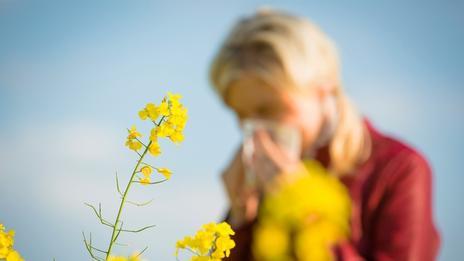 Pollen et allergies : alerte maximale aux pollens de graminées