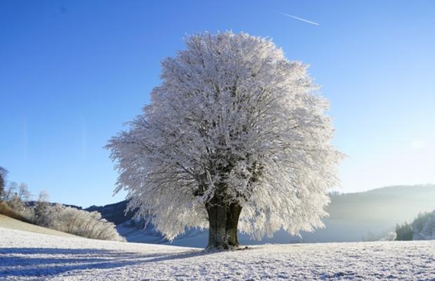 USA et Québec : froid record pour Thanksgiving