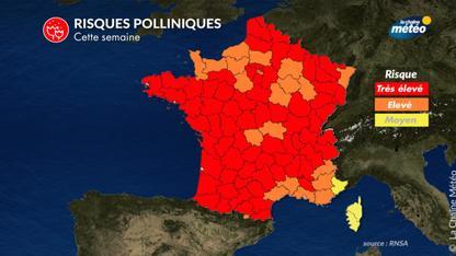 Pollens : risque très élevé d'allergies en Île-de-France