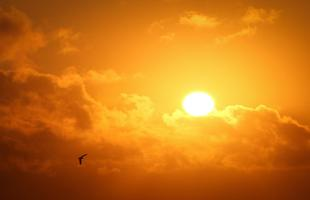 Pic de chaleur : jusqu'à 35°C