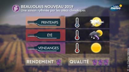 Beaujolais nouveau : beaucoup d'aléas climatiques en 2019