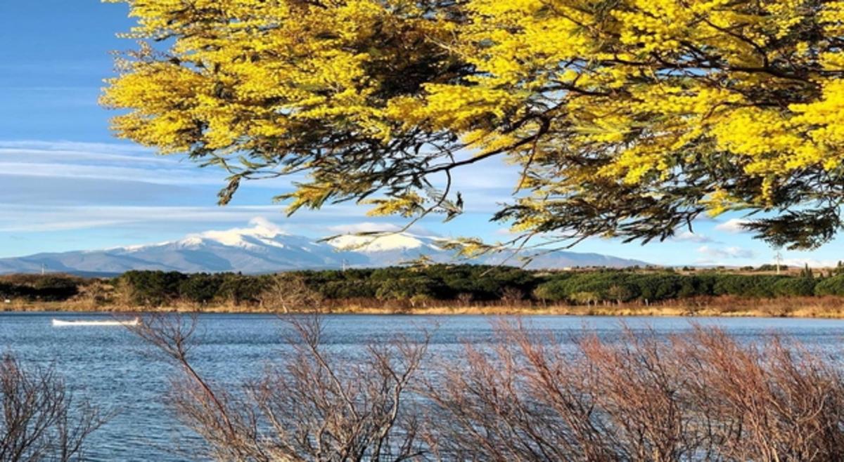 De l'hiver au printemps : pas de records mais une grande douceur durable - La Chaîne Météo