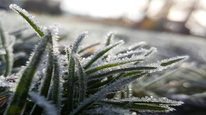 A partir de quand peut-on avoir les premières gelées ?