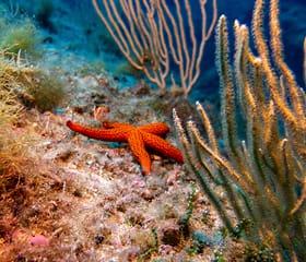 poi.diving_spot